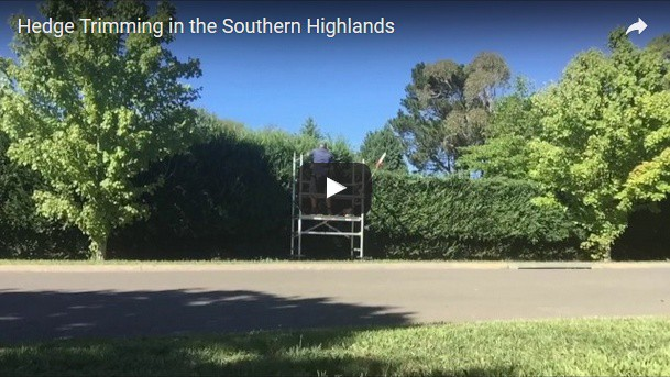Hedge Trimming Bowral Southern Highlands
